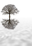 drzewa dębowego zimy. Fotografia Stock
