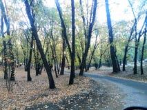 Drzewa drog? obrazy stock