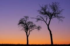 drzewa dwa Fotografia Stock
