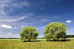 drzewa dwa Obraz Royalty Free