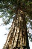 Drzewa El Ejido park 003 Zdjęcie Royalty Free