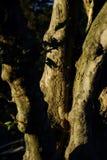 Drzewa El Ejido park 001 Zdjęcie Royalty Free