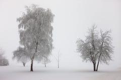 Drzewa enshrouded w mgle. Fotografia Royalty Free
