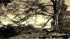 Drzewa huśtawkowy utulenie obraz stock