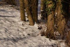 Drzewa i śnieg - Krajobrazowy mroźny Zdjęcie Stock