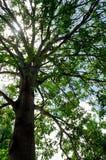 Drzewa i świateł słonecznych tła Fotografia Royalty Free