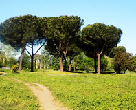 Drzewa i antyczne ruiny Obraz Stock