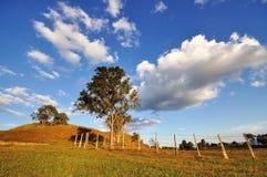 Drzewa i chmury Zdjęcie Royalty Free