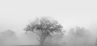 Drzewa i ciężka mgła Zdjęcia Royalty Free
