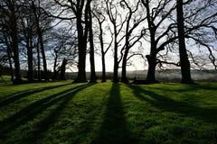 Drzewa i cienie Zdjęcie Stock