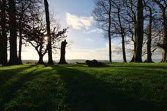 Drzewa i cienie Fotografia Royalty Free