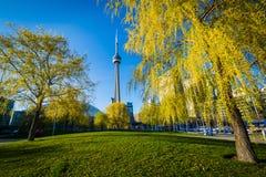 Drzewa i CN wierza widzieć od Harbourfront w Toronto, Ontario Zdjęcia Stock