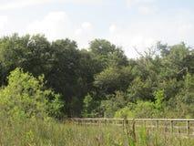 Drzewa i drewniany ogrodzenie w Floryda natury parku obraz stock