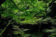 Drzewa i góra Obrazy Stock