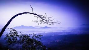 Drzewa i góry Obraz Royalty Free