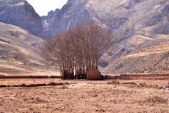 Drzewa i góry Zdjęcia Royalty Free