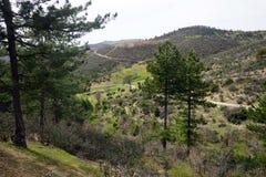 Drzewa i góry Obraz Stock