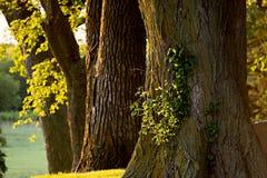 Drzewa i greenery w ranku świetle Obrazy Royalty Free