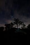 Drzewa i gwiazdy przy półmrokiem Obrazy Royalty Free