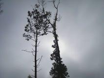 Drzewa i ich gałąź w lesie zdjęcie stock