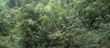 Drzewa i inny ulistnienie w kraju Zdjęcia Stock
