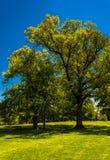 Drzewa i jasny niebieskie niebo w druida wzgórza parku, Baltimore Obrazy Royalty Free