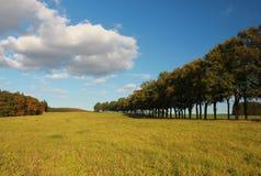 Drzewa i jesień Obrazy Stock