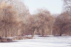 Drzewa i jezioro Zdjęcie Royalty Free