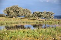 Drzewa i jezioro zdjęcie stock