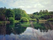 Drzewa i jezioro Zdjęcia Royalty Free