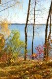 Drzewa i jezioro w jesieni obrazy royalty free