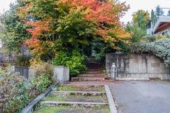 Drzewa 3 I kroki zdjęcie royalty free