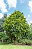 Drzewa i krzaki obrazy stock