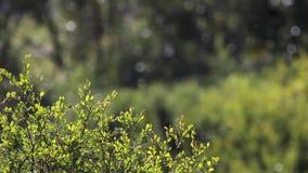 Drzewa i krzaki pokazuje jesieni colours wśród roztoki w cairngorms parki narodowi, Scotland zbiory
