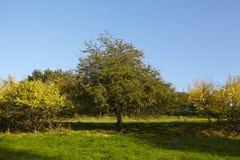 Drzewa i krzaki w spadku Obraz Stock