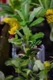 Drzewa i kwiatów modele Zdjęcia Stock