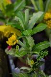 Drzewa i kwiatów modele Fotografia Stock