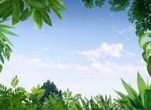 Dekoracja z roślinami Zdjęcie Stock