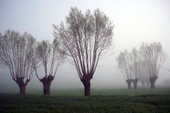 Drzewa i mgła Zdjęcie Stock