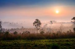 Drzewa i mgła Zdjęcia Royalty Free