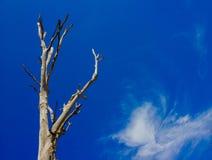 Drzewa i nieba tło Obrazy Royalty Free