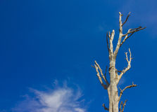 Drzewa i nieba tło Obrazy Stock