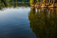 Drzewa i niebieskie niebo odbijają w lasowym jeziorze Piękny Lans Obrazy Royalty Free