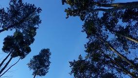 Drzewa i niebo obraz royalty free