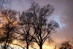 Drzewa i niebo Zdjęcia Royalty Free
