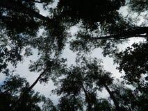 Drzewa i niebo Obrazy Royalty Free