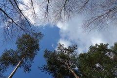Drzewa i niebo Zdjęcie Stock
