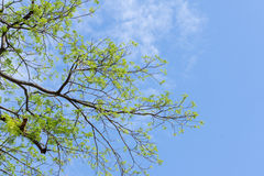 Drzewa i niebo Zdjęcie Royalty Free
