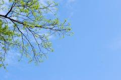 Drzewa i niebo Obraz Stock