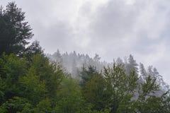 Drzewa i niebo Obrazy Stock
